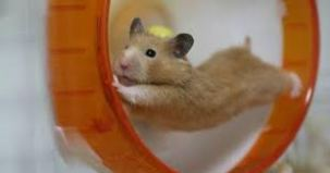Hamster in Orange Wheel